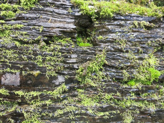 Moss on rocks GNP